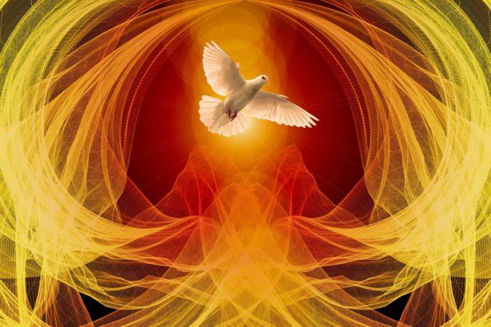 weiße-taube-als-symbol-des-heiligen-geistes